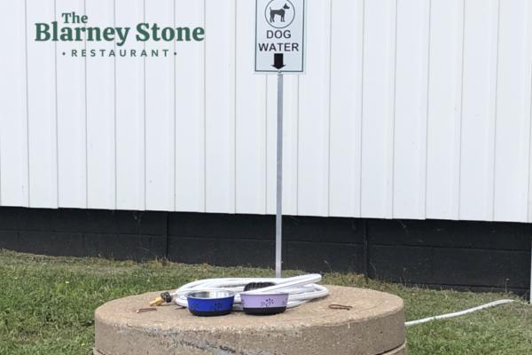 Puppy Hydration Station